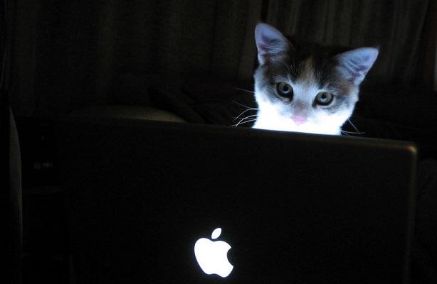 cat-mac